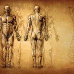体癖概論:野口晴哉の体癖論を基本からわかりやすく解説